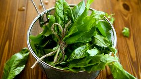 Bunch of organic fresh green sorrel, on a table. stock footage