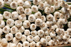 Bunch of Organic Garlic Royalty Free Stock Image
