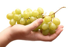 Bunch of organic grapes in hand Stock Photography