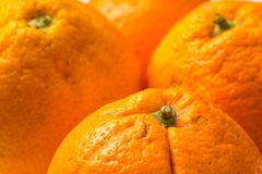 Bunch of Organic Oranges Royalty Free Stock Images