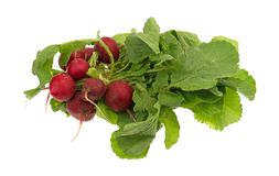 Whole organic radishes bunch. A bunch of organic radishes with greens isolated on a white background Stock Image
