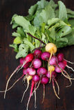 Bunch organic radishes Stock Photo