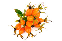 Bunch of oval orange rose hip Royalty Free Stock Photos
