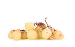 A bunch of overripe grapes isolated on white Royalty Free Stock Photos