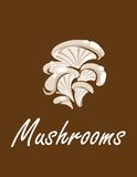 Bunch of oyster mushrooms with text Mushrooms Stock Images