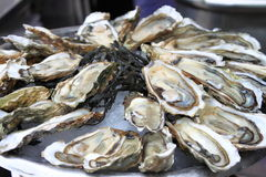 Bunch of Oysters. For sale in a fish market Stock Photos