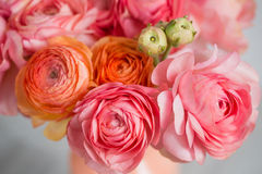 Bunch of pale pink ranunculus persian buttercup  light background, wooden surface. glass vase Royalty Free Stock Photo
