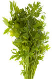 Bunch of parsley. A bunch of parsley isolated on white royalty free stock photos