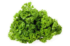 Bunch of the parsley Stock Images