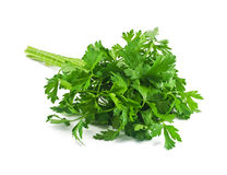 A bunch of parsley. On a white background Royalty Free Stock Photos