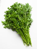 Bunch of parsley Royalty Free Stock Photo