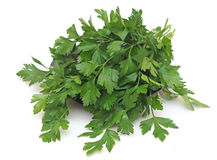 A bunch of parsley Royalty Free Stock Image