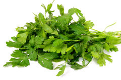 Bunch of a parsley. Fresh bunch of a parsley, it is isolated on a white background Stock Photography