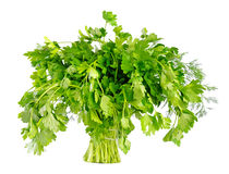 Bunch of parsley as tree. Isolated on white background Royalty Free Stock Photography