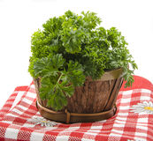 Bunch of parsley Stock Images
