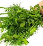 Bunch of parsley and herb Royalty Free Stock Image
