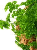 Bunch of parsley, isolated, close-up Stock Images