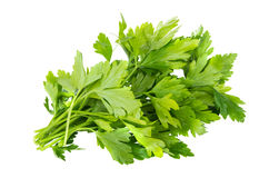 Bunch of parsley isolated on white Stock Images