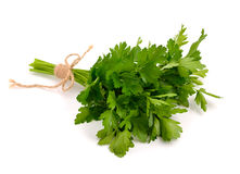 Bunch of Parsley  isolated on white background. Stock Photo