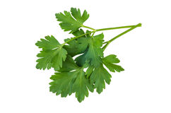 Bunch of parsley isolated on white Stock Image