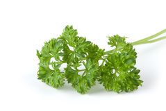 Bunch of parsley leaves Royalty Free Stock Photo