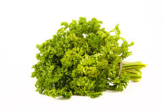 Bunch of parsley tied up twine on a white background Stock Photos