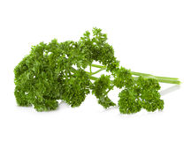 Bunch of parsley on white Stock Photography