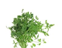 Bunch of parsley on a white. royalty free stock photo