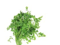 Bunch of parsley on a white. stock photos
