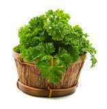 Bunch of parsley Stock Photography