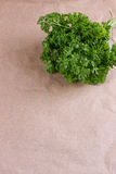 Bunch of parsley and wrapping paper Royalty Free Stock Photo