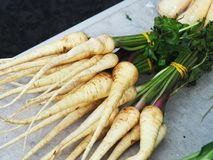 A bunch of Parsnip Royalty Free Stock Photography