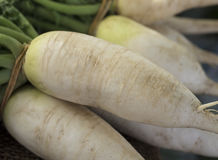 Bunch of Parsnips Royalty Free Stock Photo