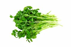 Bunch of pea shoots over a white background. Bunch of fresh pea shoots in a cluster over a white background Stock Image