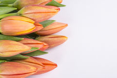 Bunch of Peach Color Tulips  2 Royalty Free Stock Photos