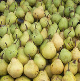 Bunch of pears. Bunch of green pears, biological and sweet Royalty Free Stock Photos