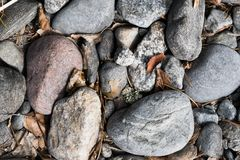 Bunch of pebble stones on the ground with leaves between. Top view Royalty Free Stock Photo