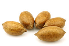 Bunch of pecan nuts Royalty Free Stock Images