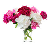 Bunch of peonies Royalty Free Stock Photos