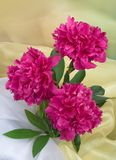 Bunch of peony flowers. Bunch of pink peony flowers Stock Photography
