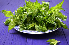 Bunch of peppermint. Banch of peppermint on the plate Stock Photo
