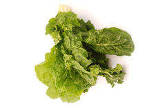 Bunch of perpetual spinach Stock Photography