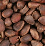 Bunch of pine nuts. Stock Image