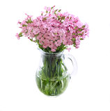 Bunch of pink field flowers Royalty Free Stock Photos