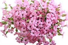 Bunch of pink field flowers Stock Photo