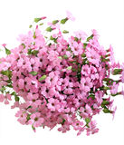 Bunch of pink field flowers Stock Images