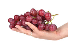 Bunch of pink grapes in palm Royalty Free Stock Image