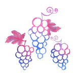 Bunch of pink grapes watercolor illustration. Royalty Free Stock Photo