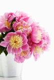 Bunch of pink peonies Stock Photography