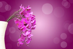 Bunch of pink phalaenopsis orchids in a vase Royalty Free Stock Images